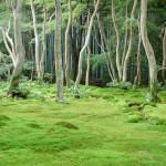Grounds of the Gioji moss temple, Arashiyama, Kyoto, 2007